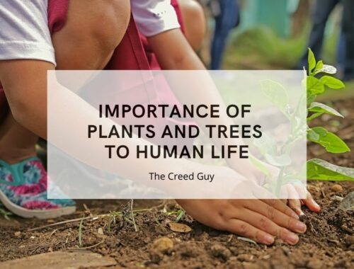 importance of plants and trees to human life